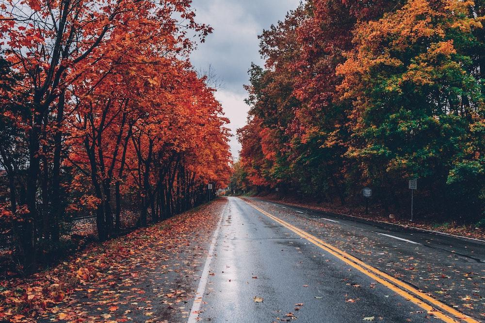 strada-con-alberi-autunnali