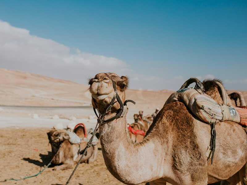 motorizzonti_tour-operator_Egitto_6