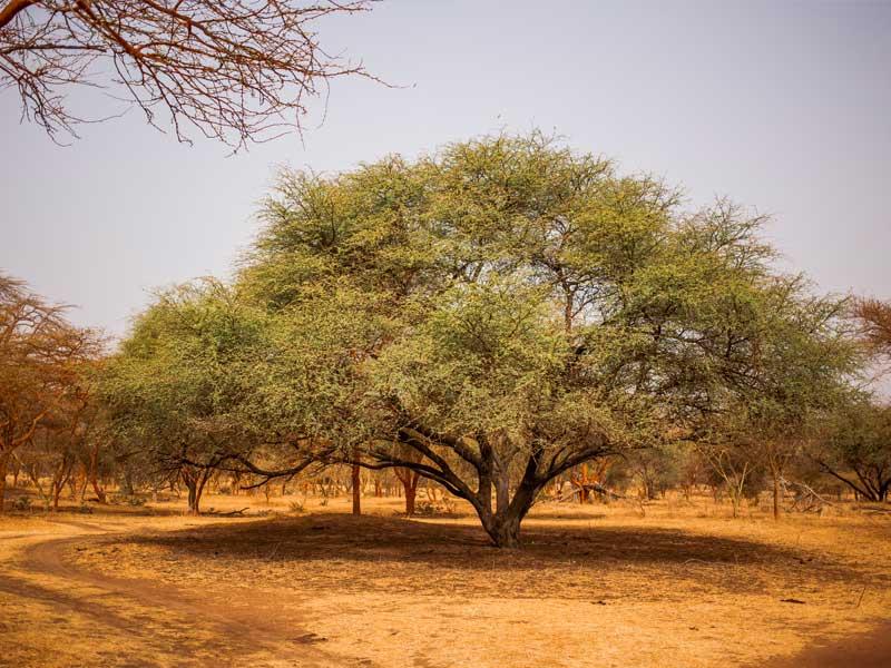 motorizzonti_tour-operator_Senegal_3