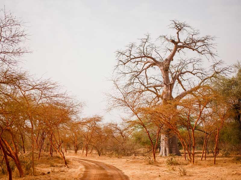 motorizzonti_tour-operator_Senegal_6